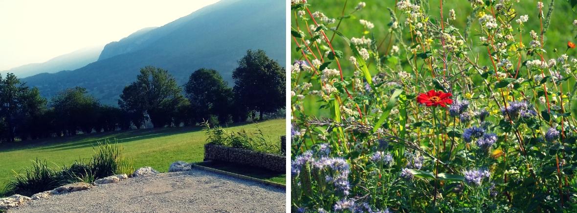 Gîte Etoile Boréale - phytoépuration et fleurs mellifères