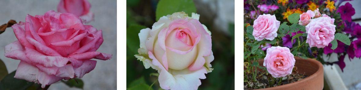 fleurs du jardin du Gîte Etoile Boréale